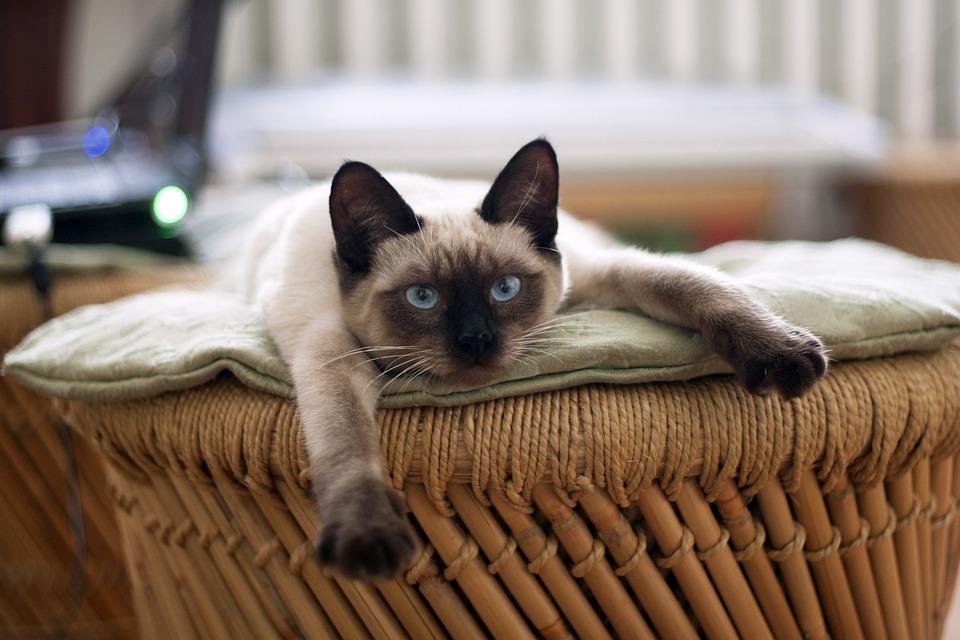 5 redenen om voor een kattenoppas te kiezen