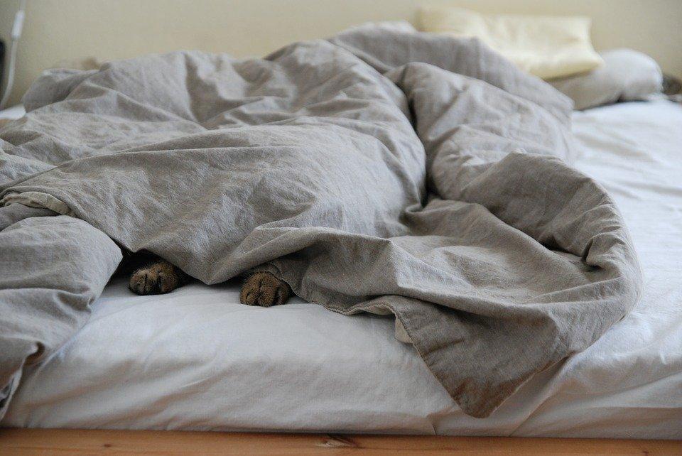 PodKat #002: Zes dingen die je kat ècht nodig heeft