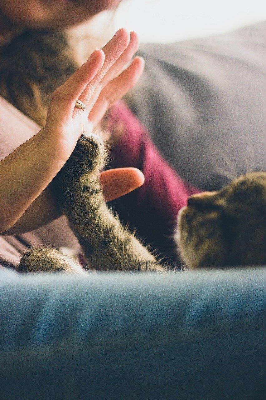 PodKat #004: Kat in 't bakkie: onzindelijkheid voorkomen